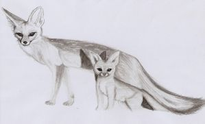 Cape Foxes by Rei-Catlang