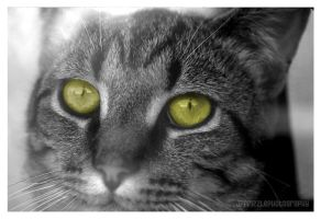 Tigger's eyes by jpfrizzle