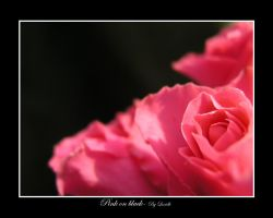 Pink on black by lexidh