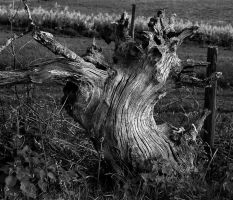 old wood 2 by awjay