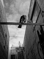 King Of The Alley by Vermontster