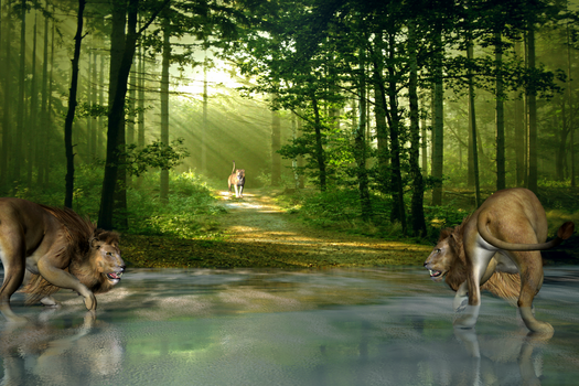 Lions Crossing by sylver-dali