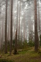 Morning forest by khmaria