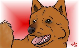 Finnish Spitz by Sefja