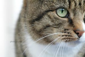 A cats eye by sisselPhotography