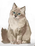 21-day drawing challenge - 01 - Cat Study by Tifaerith