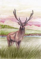 The Red Deer by Kukulein