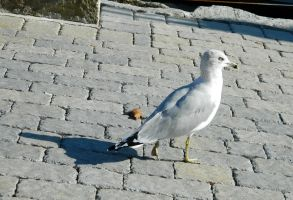 March of the Gull by SlateGray