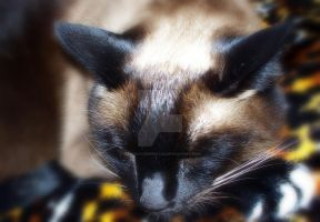 Let Sleeping Cats Lie by SilvaNaturePhotos