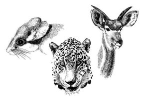 Animals trio inks by Osmont2