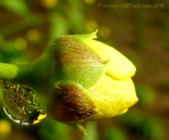Shades Of March 141 by dandy-cARTastrophe