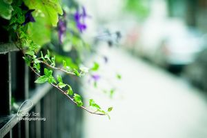 Day Twenty-One - DOF by Lady-Tori