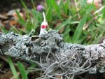 White Pikmin and Lichen by Rutela