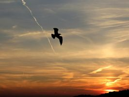 Flying Through the Sunset by Michies-Photographyy