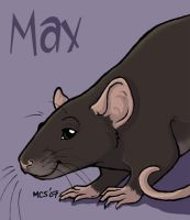 Max the rat by Leona
