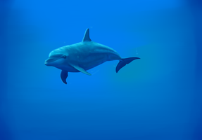 Dolphin by LauriieT