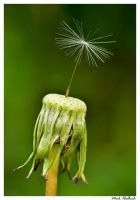 Last one Standing by MrMeik