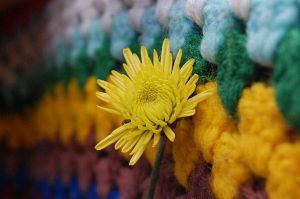Rows of Color by Grayash9755