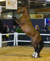 STOCK - 2014 Total Equine Expo-17 by fillyrox