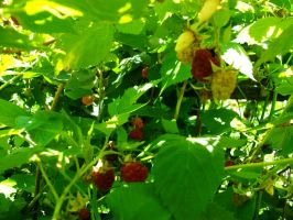 Bunchles of Berries by Gell-pen