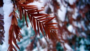 Red Snow Green by estel28