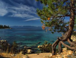 Lake Tahoe Tree by MartinGollery