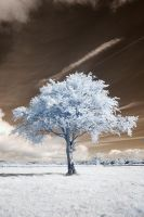 Infrared Tree by Okavanga