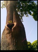 love is found even in trees by bommie
