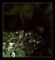 """""""pearls"""" by cilie"""