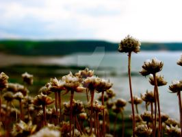 Wild Clover on the Moors by paigetownsendphotos