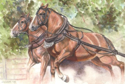 Draft Horses by In-The-Distance