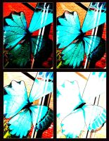 Contrasting Butterflies by pyonicist