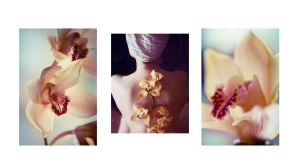 'Orchid' triptych by alexciel