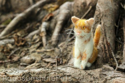 Ginger Kitty by RaeosunshinePets