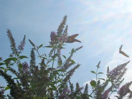 Butterfly Bush and Butterflies 1 by DiamondLeaf