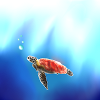 Turtle by SilverTailTwo