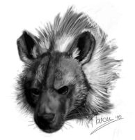 Brown Hyena Greyscale by Rogue-Lgr