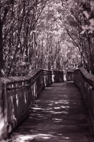 Path through the Mangroves by Solracezz