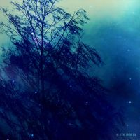 winterBLUEs - wind by EvaShoots
