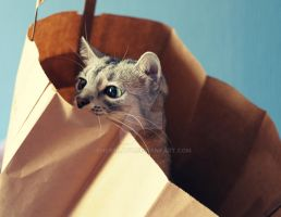 A funny cat in a bag I by cherrilady