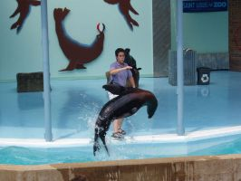 Sea Lion from St. Louis Zoo 4 by Seferia