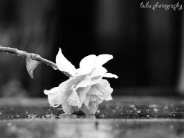 ...to die in the cold rain... by bogdanici