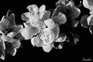 White flower 2 by Emiliee91