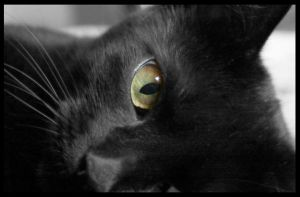 cleo the cat 1 by mzkate
