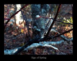 Sign of Spring by rcoots