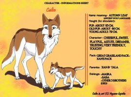 Calin - Informations sheet by Aquene-lupetta