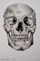 Skull, by Ariel-Photographer