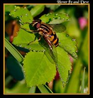 Another Another Hover Fly by boron