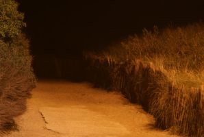 Dunes pathway stock photo by Anthey