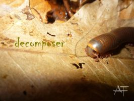 decomposer by AmmoniteFiction